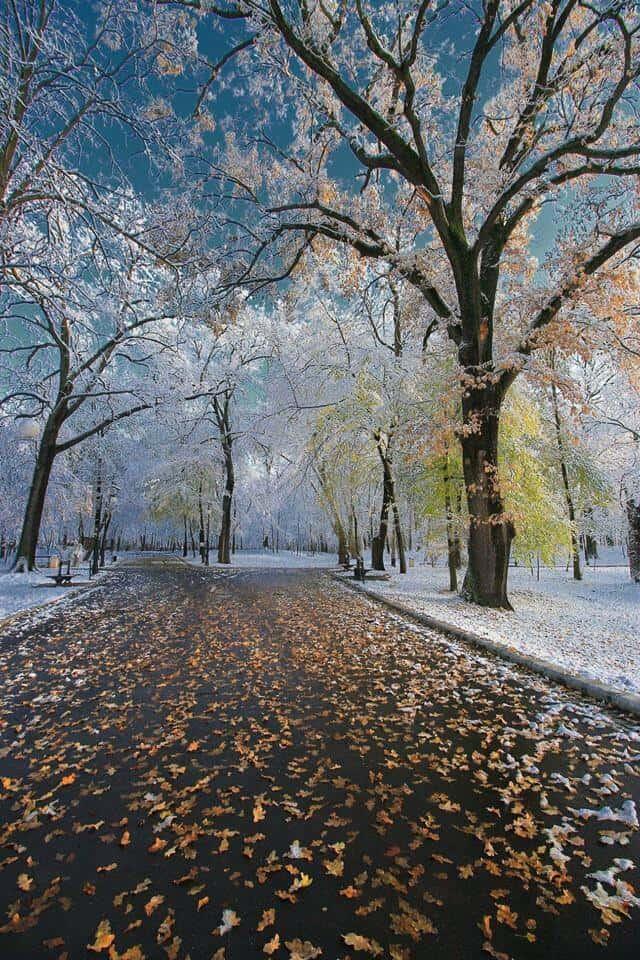 פארק קראיובה Nicolae Romanescu