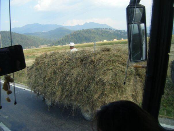 סוס ועגלה בגבישים ברומניה