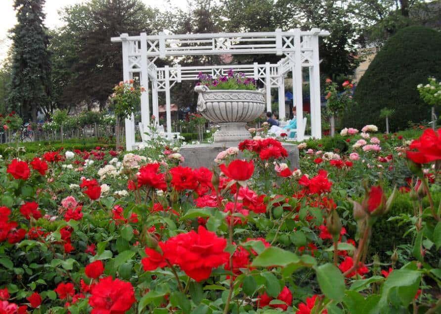 גן הורדים בטימישוארה