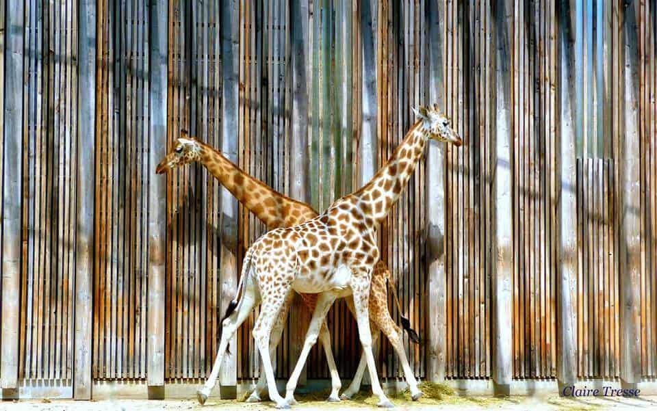 גן החיות של ליון