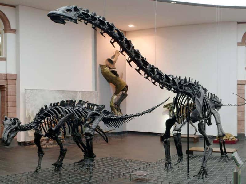 מוזיאון הטבע סנקנברג